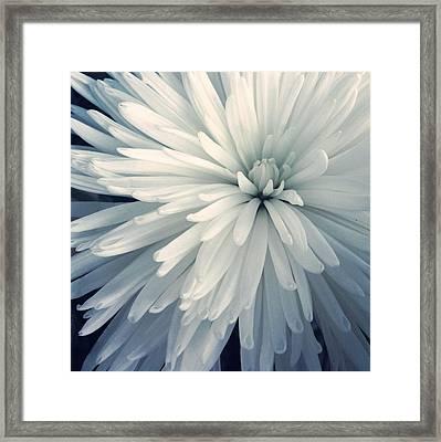 Detail Shot Of Cropped White Flower Framed Print by Valerie Locante / Eyeem