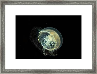 Detailed And Bright Bioluminescence Framed Print by Sheila Haddad