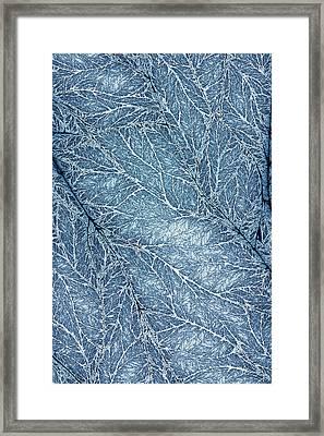 Detailed Leaf Texture Blue Framed Print