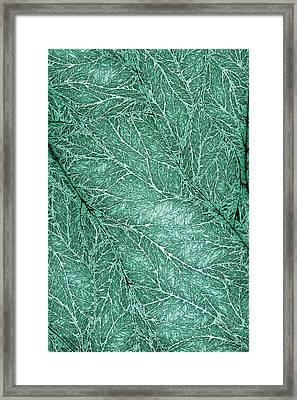 Detailed Leaf Texture Emerald Framed Print