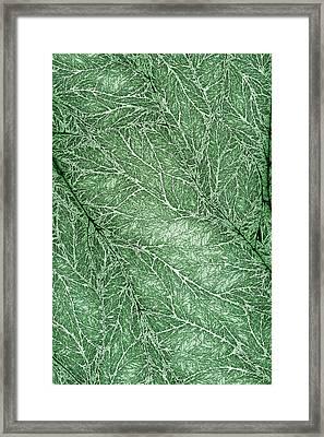 Detailed Leaf Texture Green Framed Print