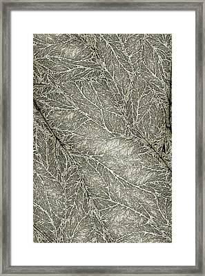 Detailed Leaf Texture Framed Print