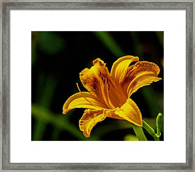 Detailed Lily Framed Print by Dave Bosse
