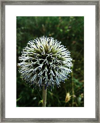 Details Framed Print by Lucy D