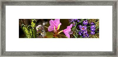 Details Of Early Spring And Crocus Framed Print by Panoramic Images