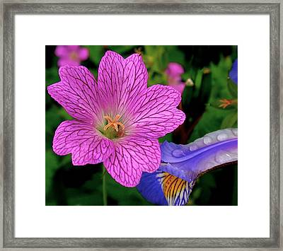 Details Framed Print by Rona Black