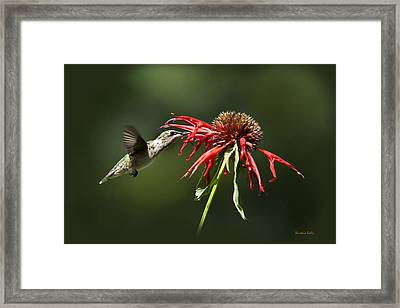Determination Framed Print by Christina Rollo
