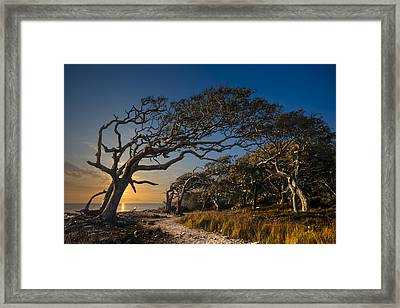 Determination Framed Print by Debra and Dave Vanderlaan