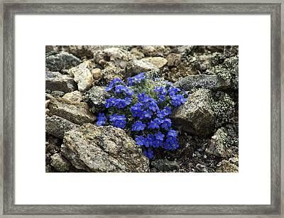 Framed Print featuring the photograph Determination by Jeremy Rhoades
