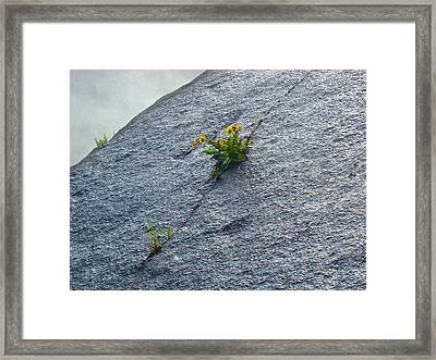 Framed Print featuring the photograph Determination by Paul Foutz