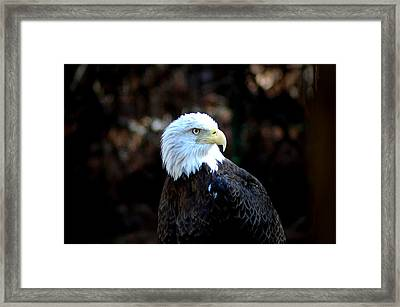 Determined Framed Print