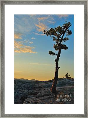 Determined Framed Print by Paul Noble