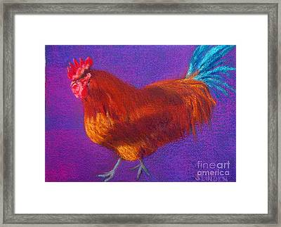 Determined Rooster Framed Print by Sandy Linden