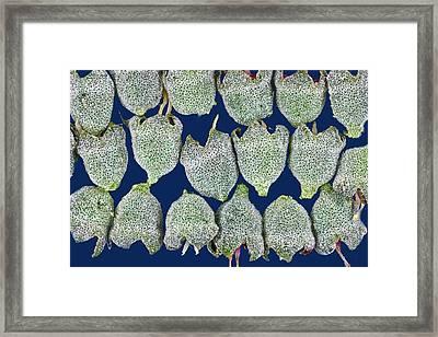 Deutzia Ovaries Framed Print by Dr Keith Wheeler