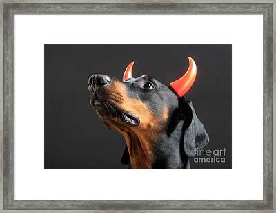 Devil Dog Framed Print by Christine Steimer