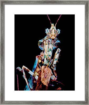 Devil Flower Mantis Framed Print by Leslie Crotty
