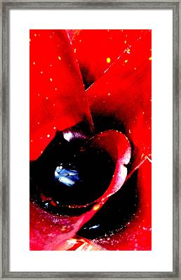 Devilish Eye Of The Bromeliad Framed Print by Antonia Citrino