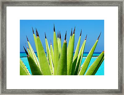 Devils Nails. Maldives Framed Print
