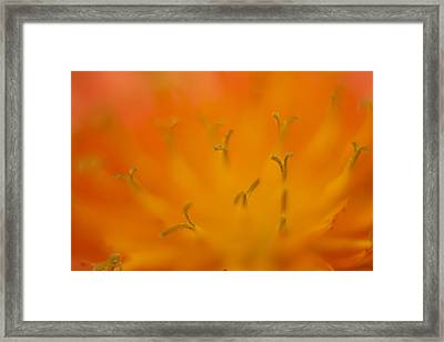 Devil's Paintbrush 1 Framed Print by Jessica Lowell