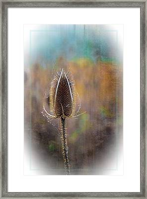 Dew And Thistle Framed Print