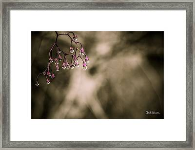 Dew Berries Framed Print by Charlie Duncan