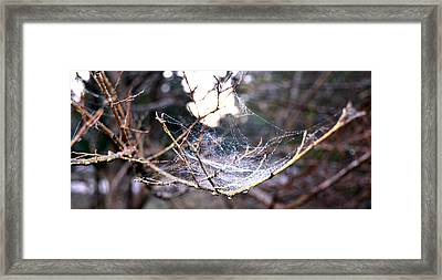 Dew Covered Spiderweb Framed Print by Julie Cameron