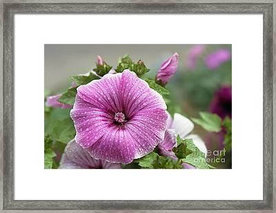 Dew Drop Petals Framed Print