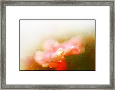 Dew Drops And Bokeh Framed Print by Leapdaybride