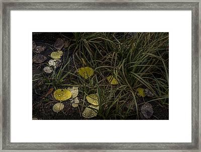 Dew Drops Framed Print