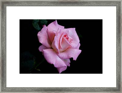 Framed Print featuring the photograph Dew Drops by Doug Norkum