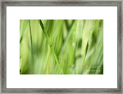 Dew Drops In Long Sunlit Grass Framed Print by Natalie Kinnear