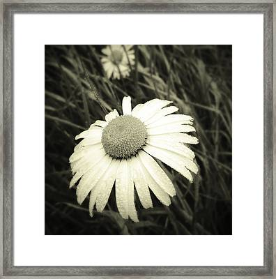 Dew Drops  Framed Print by Les Cunliffe