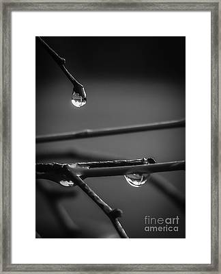 Dew Drops Framed Print by Michael Canning