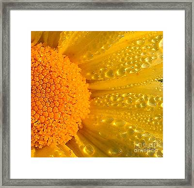 Framed Print featuring the photograph Dew Drops On Daisy by Terri Gostola