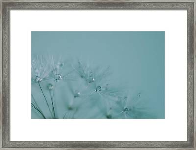 Dew Drops On Dandelion Seeds Framed Print