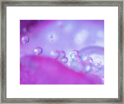 Dew Drops On Flower Petal Abstract Framed Print