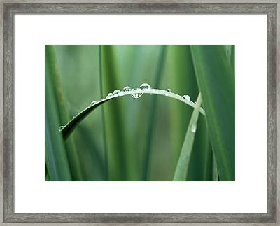 Dew Drops On Grass Framed Print by Panoramic Images