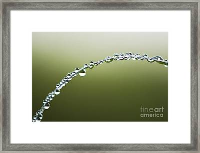 Dew Drops On Grass Framed Print by Tim Gainey