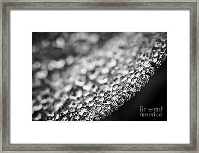 Dew Drops On Leaf Edge Framed Print