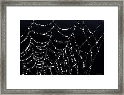 Dew Drops On Web 2 Framed Print by Marty Saccone