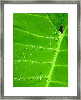 Dew Of Little Things Framed Print by Soul Full Sanctuary Photography