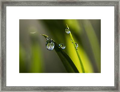 Dew Hangs From The Leaves_ Astoria Framed Print by Robert L. Potts