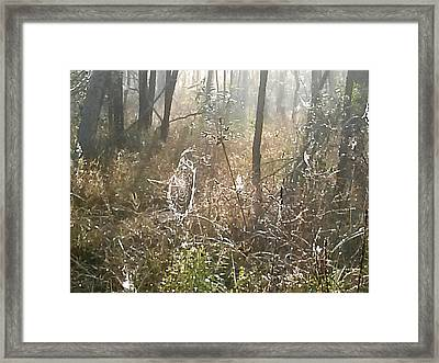 Dew Kissed Web Framed Print by Chasity Johnson