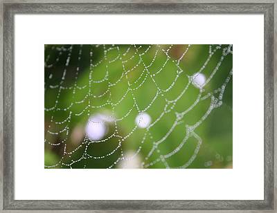 Dew On A Web  Framed Print