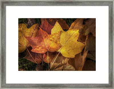Dew On Autumn Leaves Framed Print