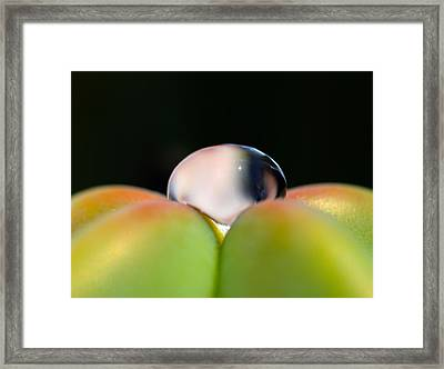 Dew On Cactus Framed Print by Joe Schofield