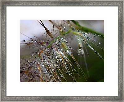 Framed Print featuring the photograph Dew On Fountain Grass by Joe Schofield