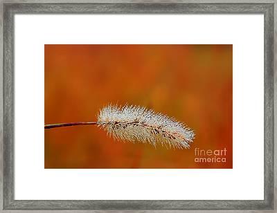 Dew On Grass Blade In Morning Framed Print by Dan Friend