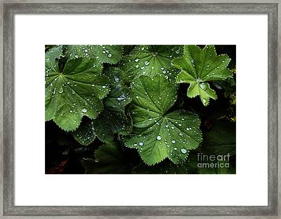 Framed Print featuring the photograph Dew On Leaves by Tom Brickhouse