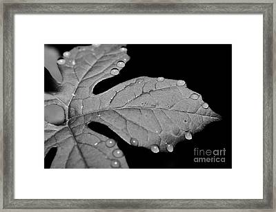 Dew Perfected Framed Print